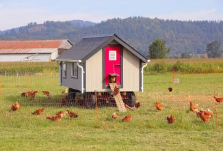 Chicken Tractor Designs to Inspire Your Creativity