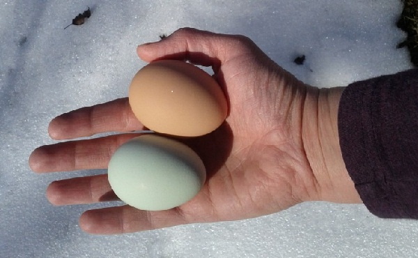 Amelia and Frida Eggs - photo by Jen Pitino