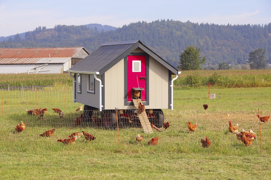 Special Issue: Raising Small Animals — The Homestead Chicken, Housing Your Flock