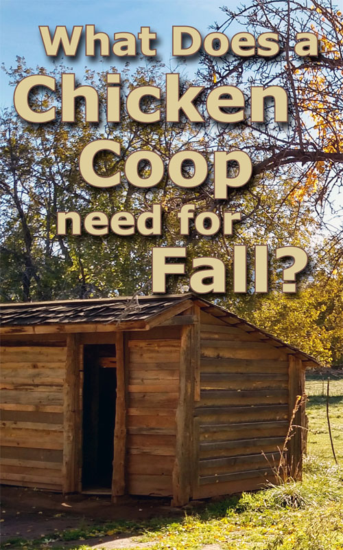Chicken Coops in Fall
