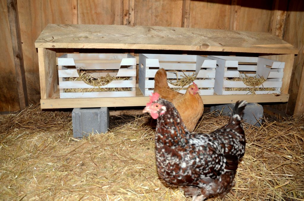 chicken-nesting- boxes