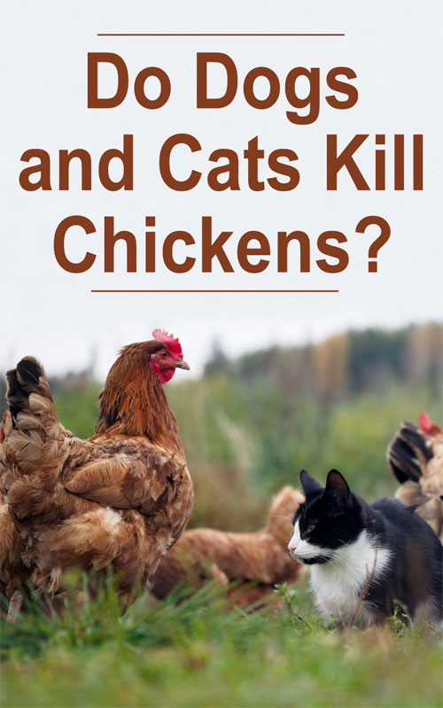 Dogs Cats Chickens
