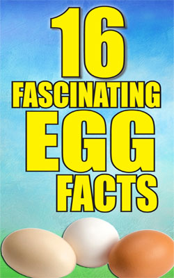 egg-facts