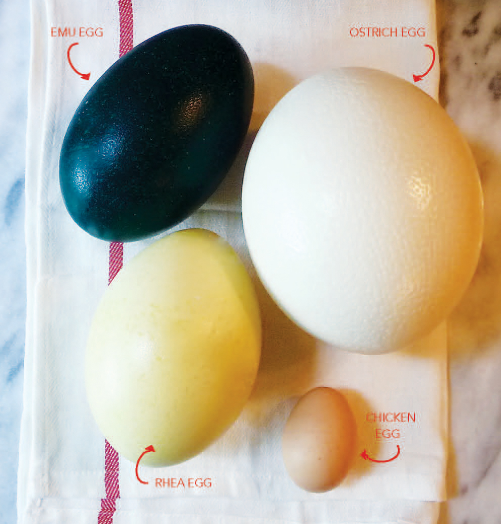 Cooking with Ostrich, Emu and Rhea Eggs