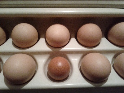 Fridge Eggs - photo by Jen Pitino
