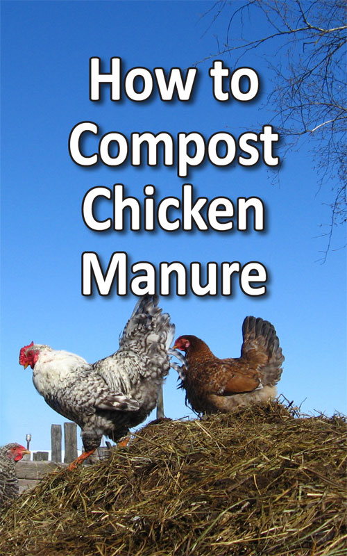 Compost Chicken Manure