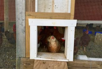 Automating a Chicken Coop Door Using Arduino