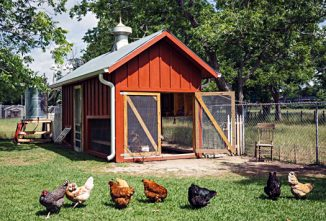 Mammy's Coop: Coolest Coops Voters' Choice Winner