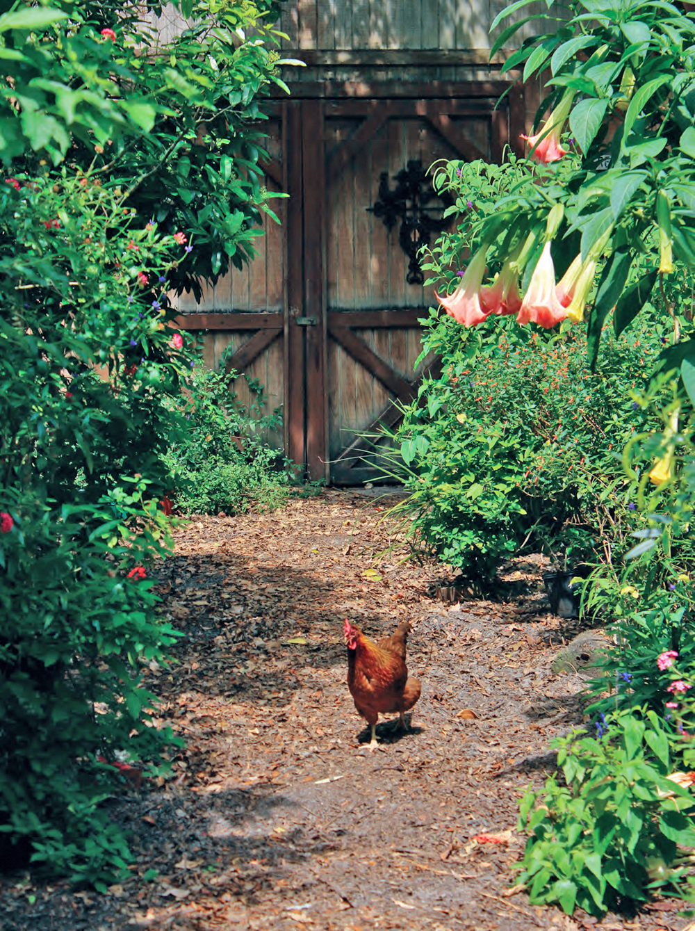 Poultry & Produce—Keeping Your Poultry In Your Garden