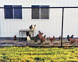Poultry Shade