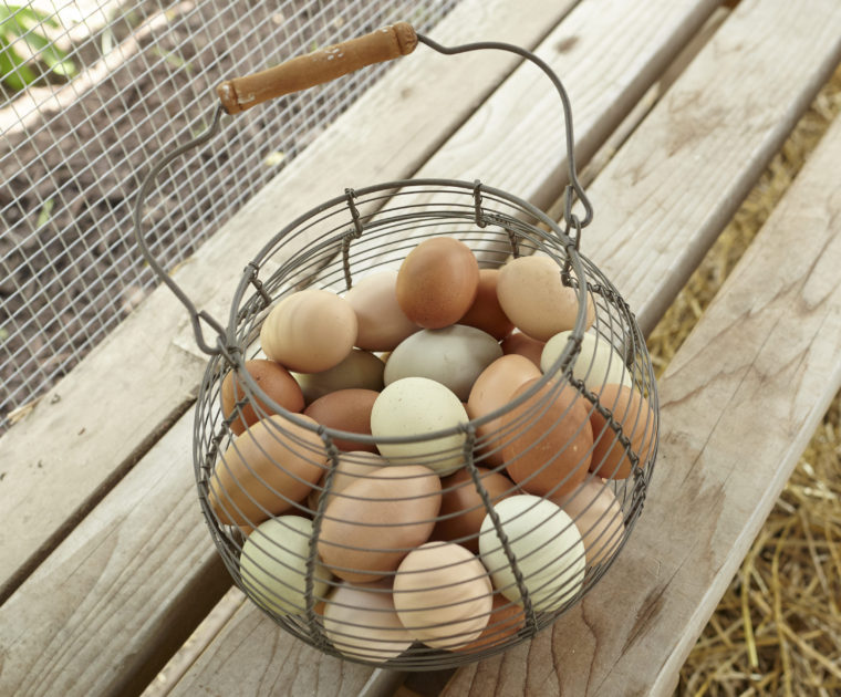 Backyard Chickens Provide a Top Omega-3 Source
