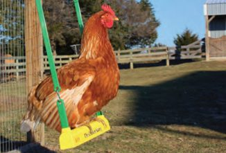 How to Make a Chicken Swing