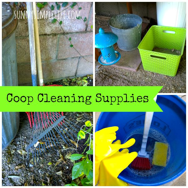 how-to-clean-a-chicken-coop