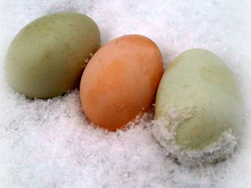 frozen-chicken-eggs