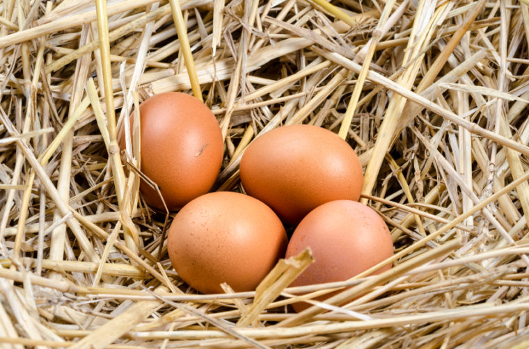 Wondering How to Wash Fresh Eggs? It's Safer Not To!