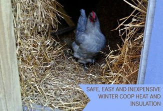 Bedding For Chickens: Safe and Easy Winter Coop Heat and Insulation