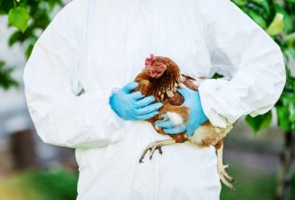 Avian Flu in Britain