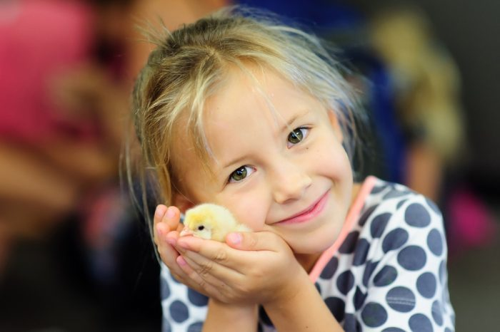 Modern Tips for Hatching Eggs for Kids in Classrooms