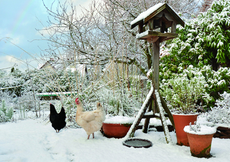 WINTER WATER: Keep it Flowing For Your Poultry!
