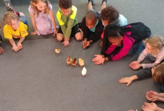 A Primer on Hatching and Raising Chicks in School