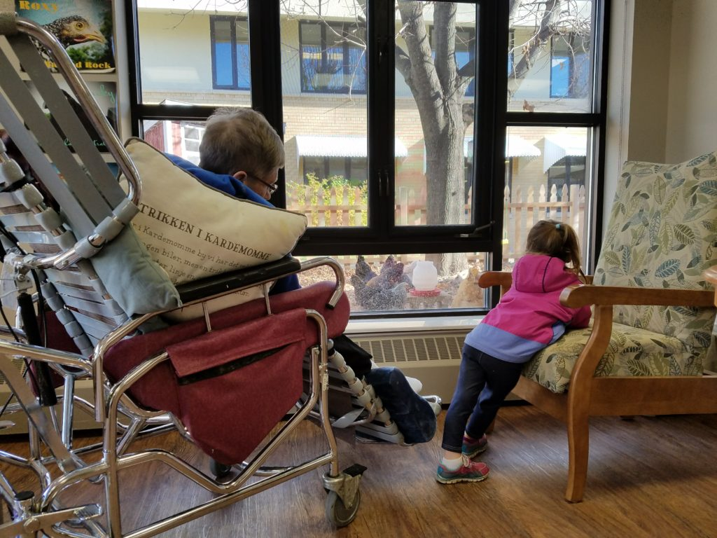 animal-therapy-in-care-homes