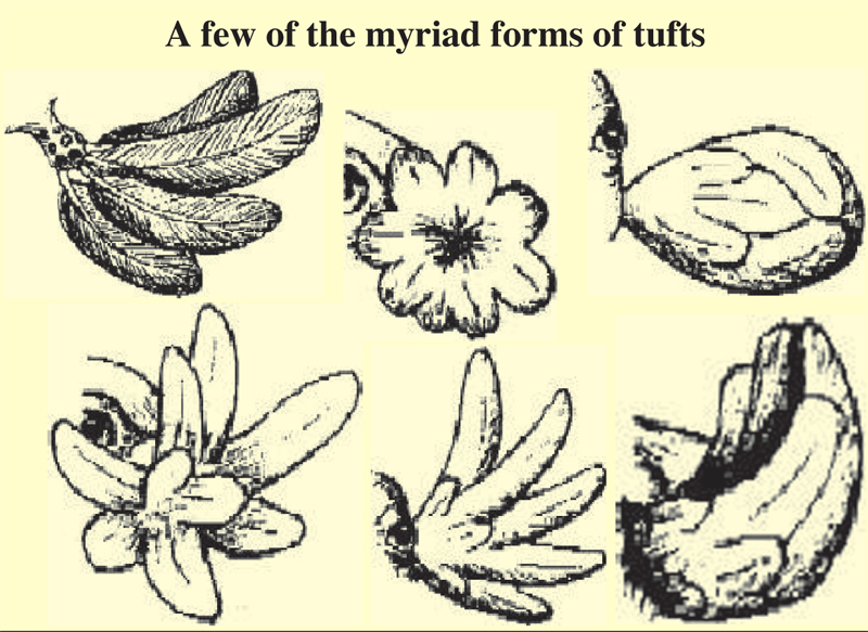 Myriad-Forms-Of-Araucana-Chicken-Tufts