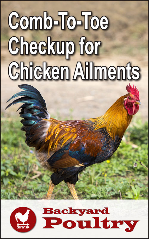 Chicken Ailments