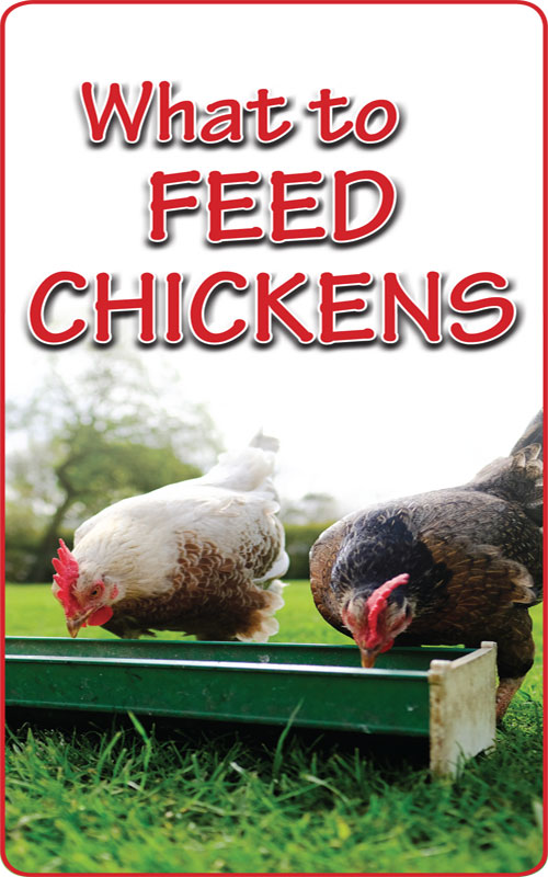 ChickenFeed-500x800
