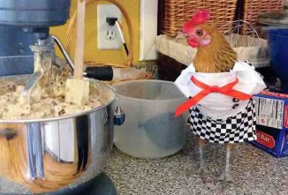 Chicken Clothes for Halloween and Christmas