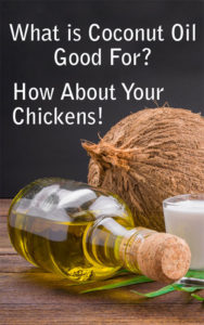 Coconut Oil For Chickens