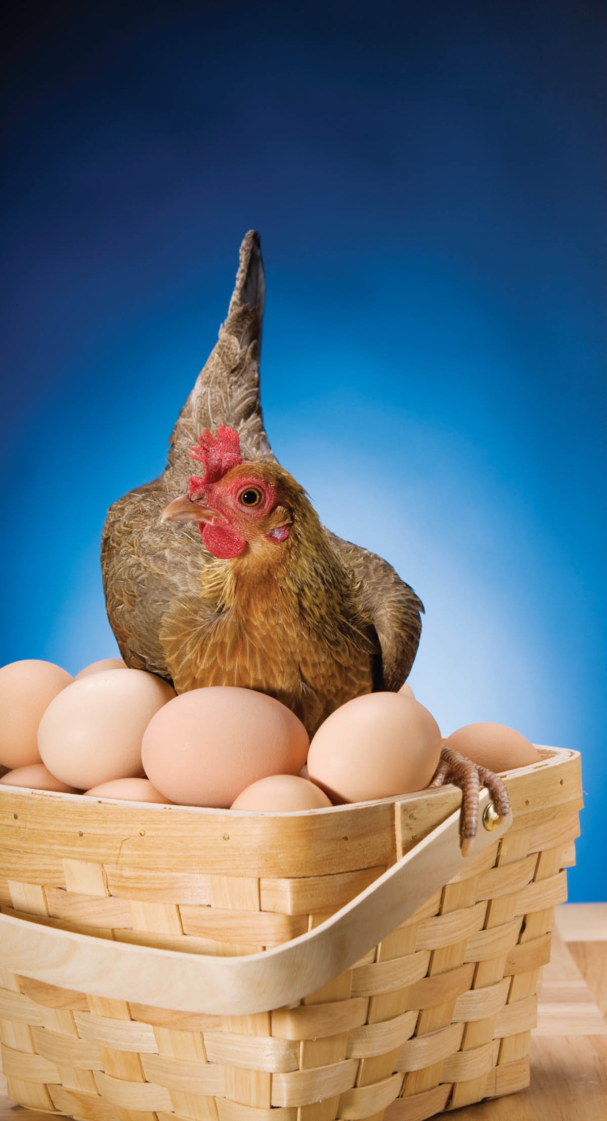We Try To Put All the Poultry Clichés and Idioms in One Basket