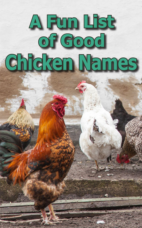 Chicken Names