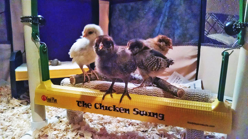 Chick Names