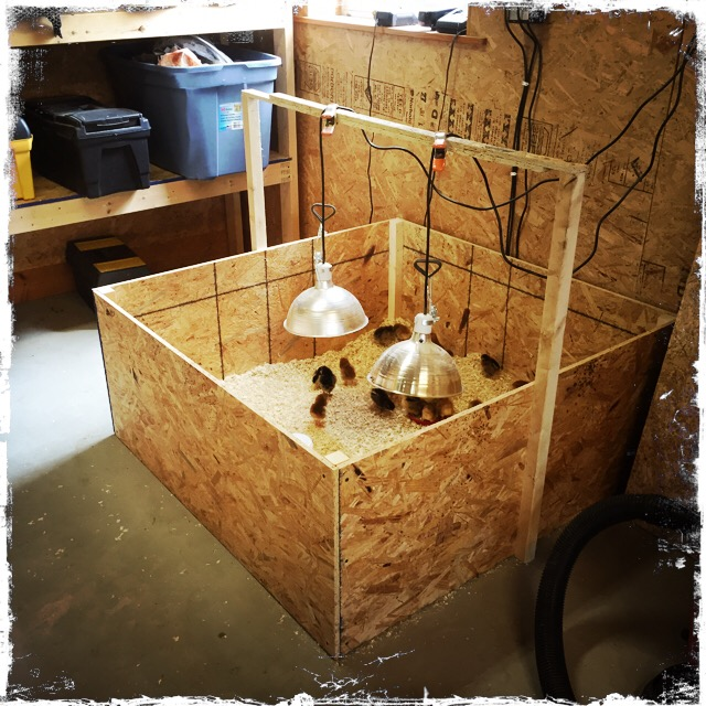 Baby Chick Brooder Ideas