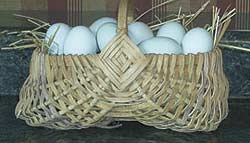 An attractive basket of blue eggs from large fowl Ameraucana wheaten hens. Photo by Barbara Campbell, Tennessee.