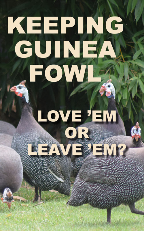 Keeping Guinea Fowl