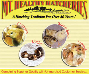 mt-healthy-hatcheries