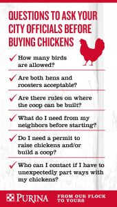 PurinaFlock_Infographic_Chickens-in-City_FINAL_011216-579x1024
