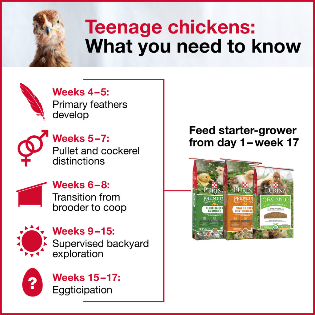 purinaflock_teenage-infographic_050917