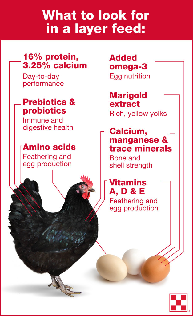 _Purina_Infographic_Layer Feed Nutrients_FINAL_082416