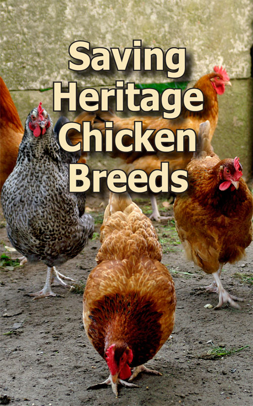 Heritage Chicken Breeds