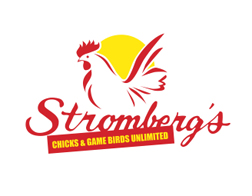 strombergs-silkie-chickens