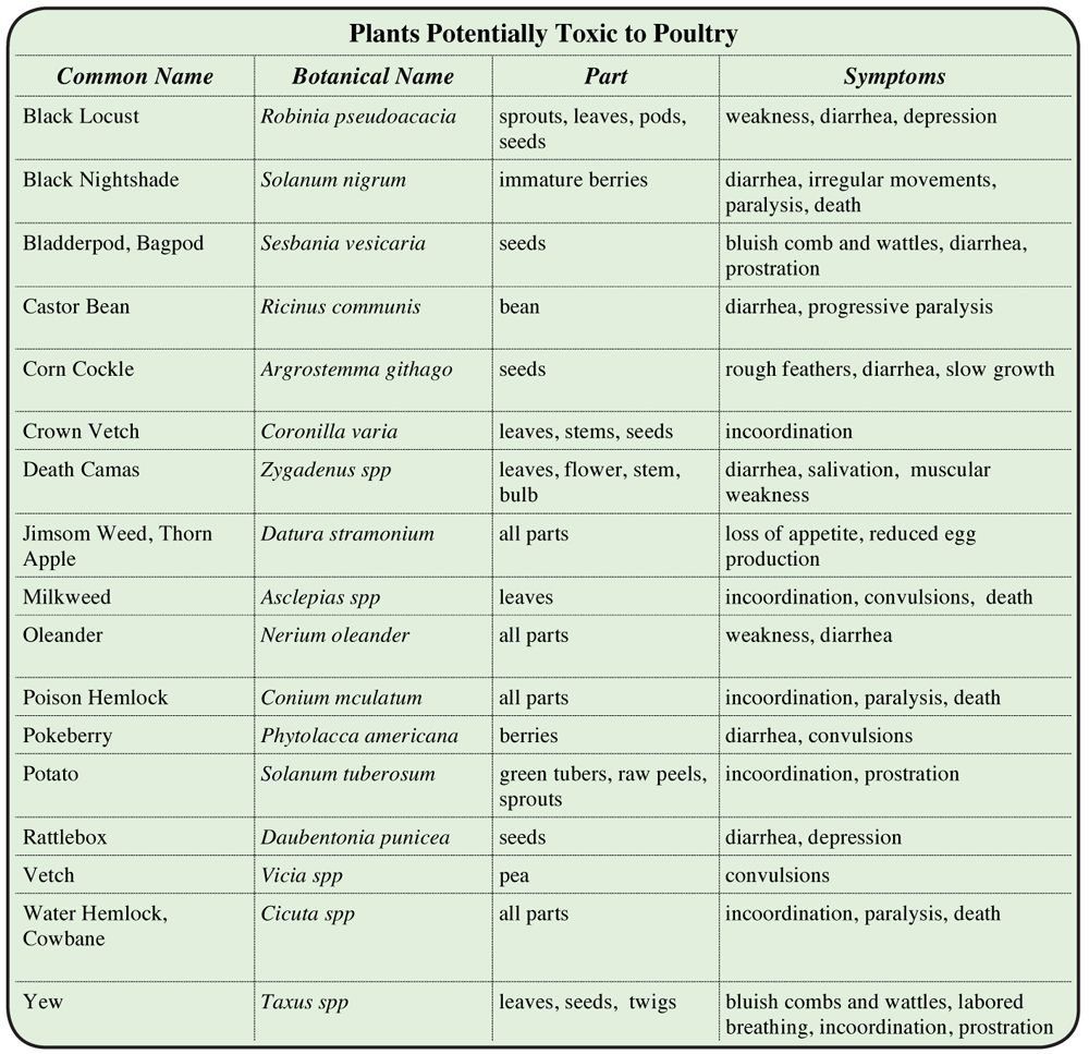 Plant Toxins Dangerous to Chickens