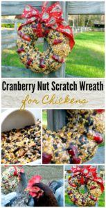 cranberry-nut-scratch-wreath-winter-treat-for-chickens