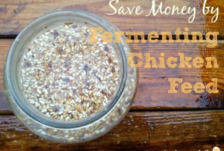 10 Tips for Fermenting Chicken Feed