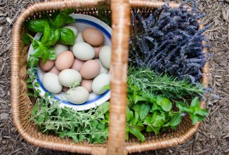 5 Immune Boosting Supplements and Herbs for Chickens