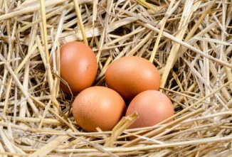 The Economics of Egg Farming