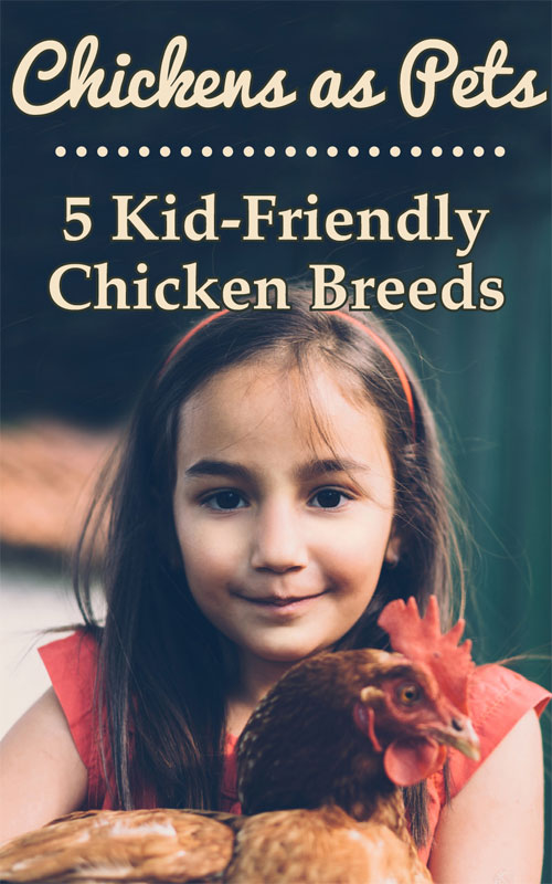 Kid Friendly Chicken Breeds