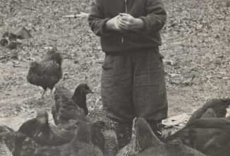 From Backyards to Factory Farms: The Evolution of Poultry Farming in America