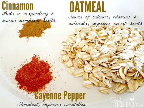 can-chickens-eat-oatmeal